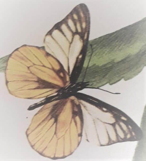 image of a butterfly on the wallpaper